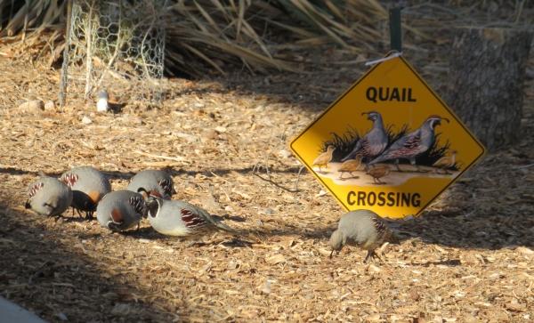 quail crossing henderson preserve nevada
