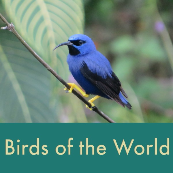 birds of the world thumb.jpg