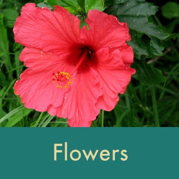 flowers thumb.jpg