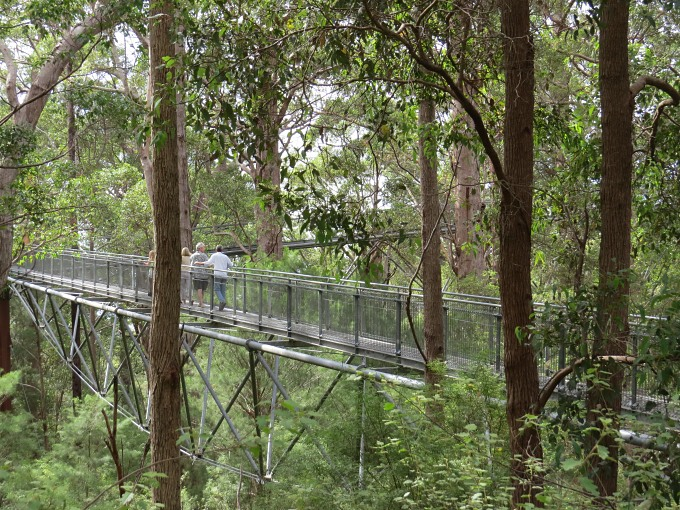 treetop walk_walkway view.jpg