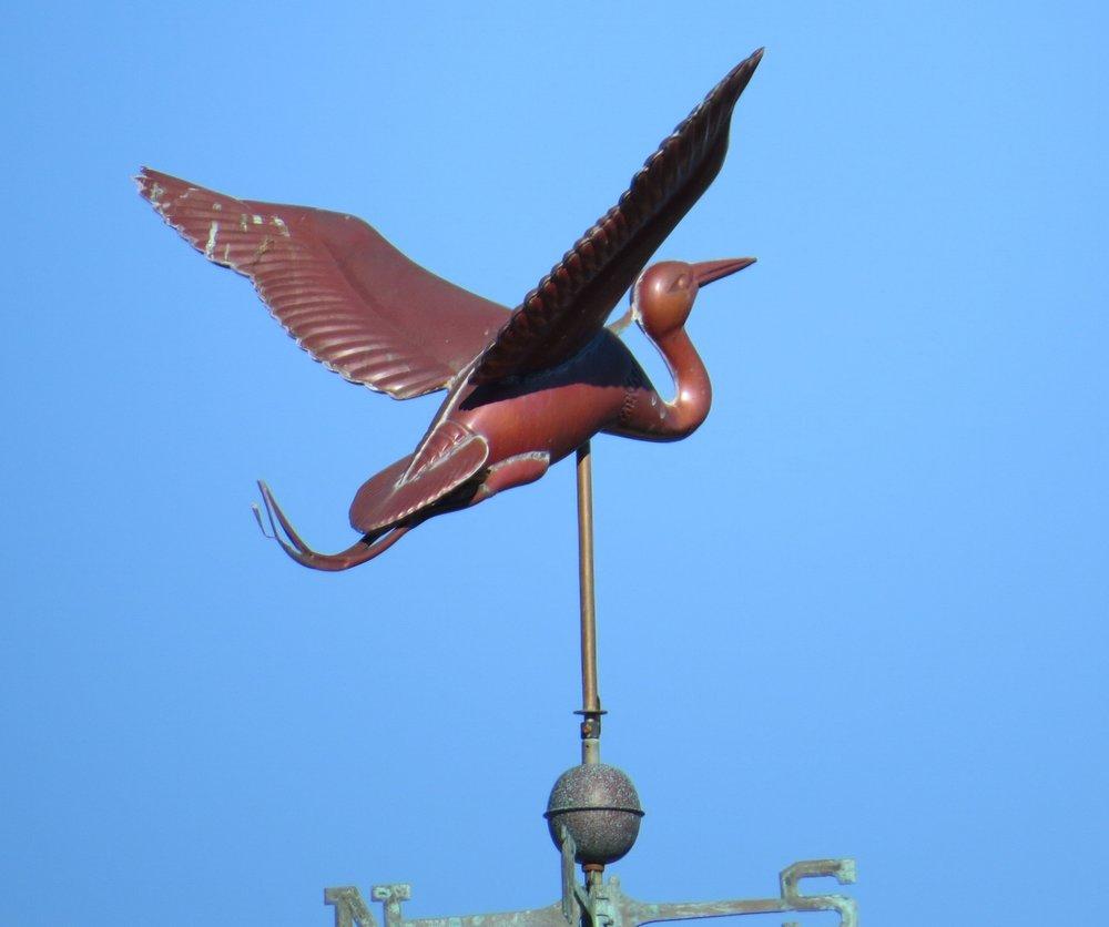 Heron - Magnolia, MA