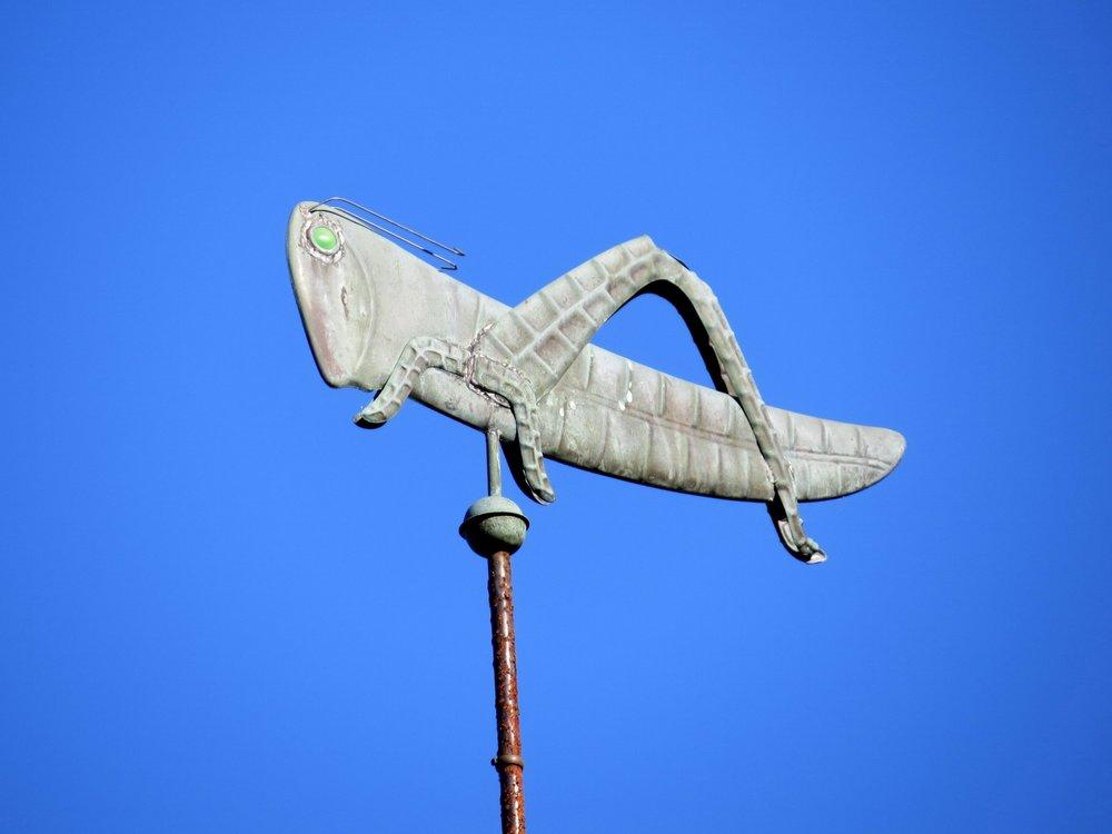 Grasshopper - Cape Cod, MA