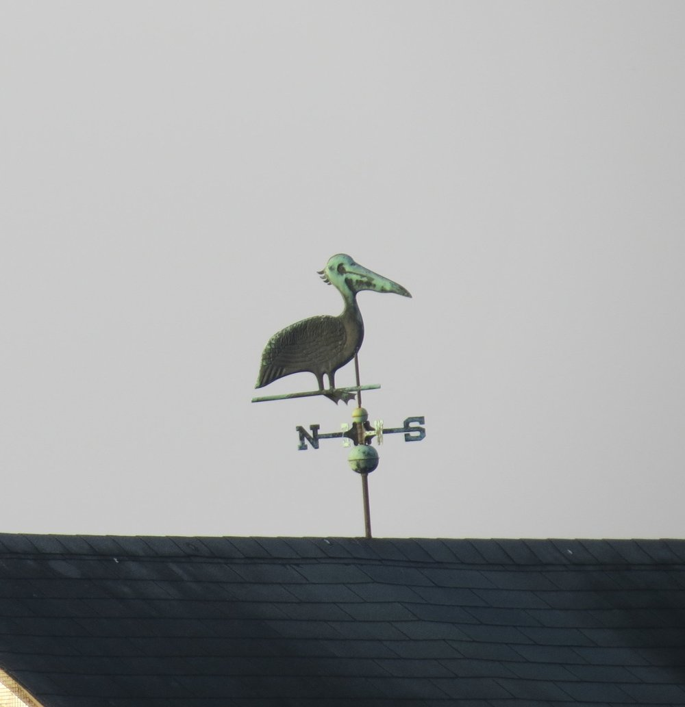 Pelican - ICW, North Carolina