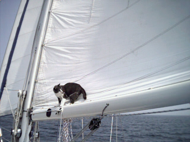 Jelly learned quickly and was particularly good at trimming the sails.