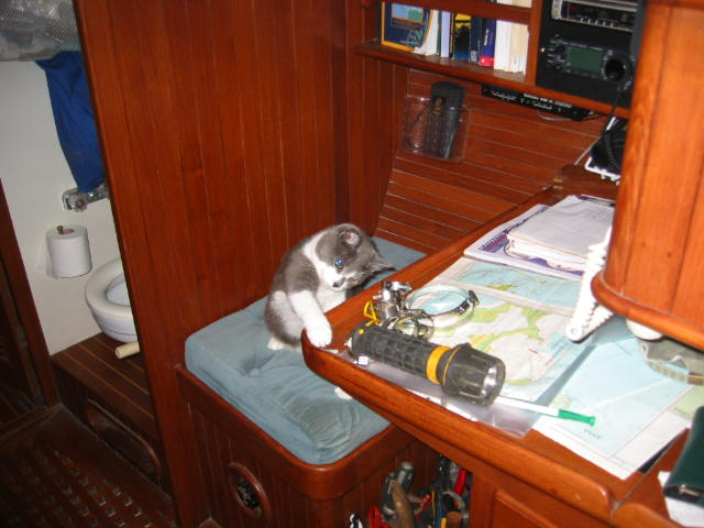 If the captain should put anything at all on his nav station that makes a good noise or fits into a cat's mouth, it should be removed to the floor immediately, swatted, then hidden.  Remove, swat, hide!