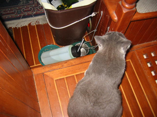 If the food dish is empty and biting the first mate's ankles does not remedy the situation, then throw back your ears and  knock over the water bottle.  When she comes to mop up all the water, she'll fill the bowl.  Take direct action.