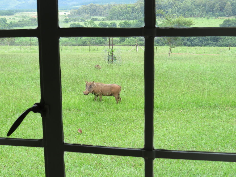 We were warned to keep the bottom of the hut's dutch door shut ... warthogs were everywhere!