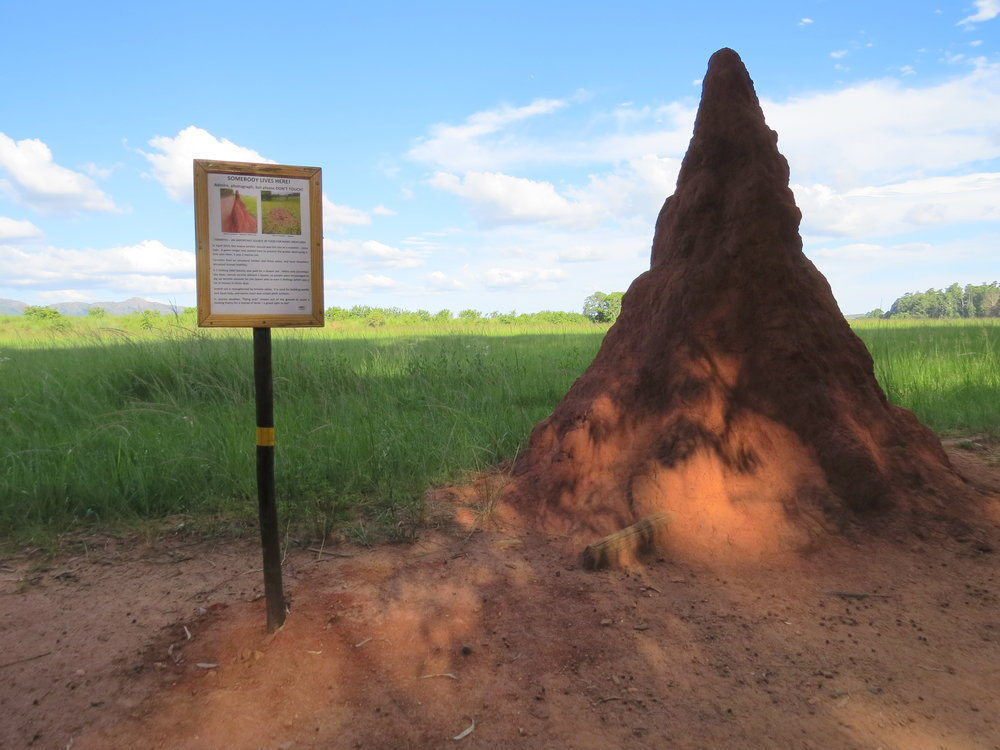 Termite hill was humming