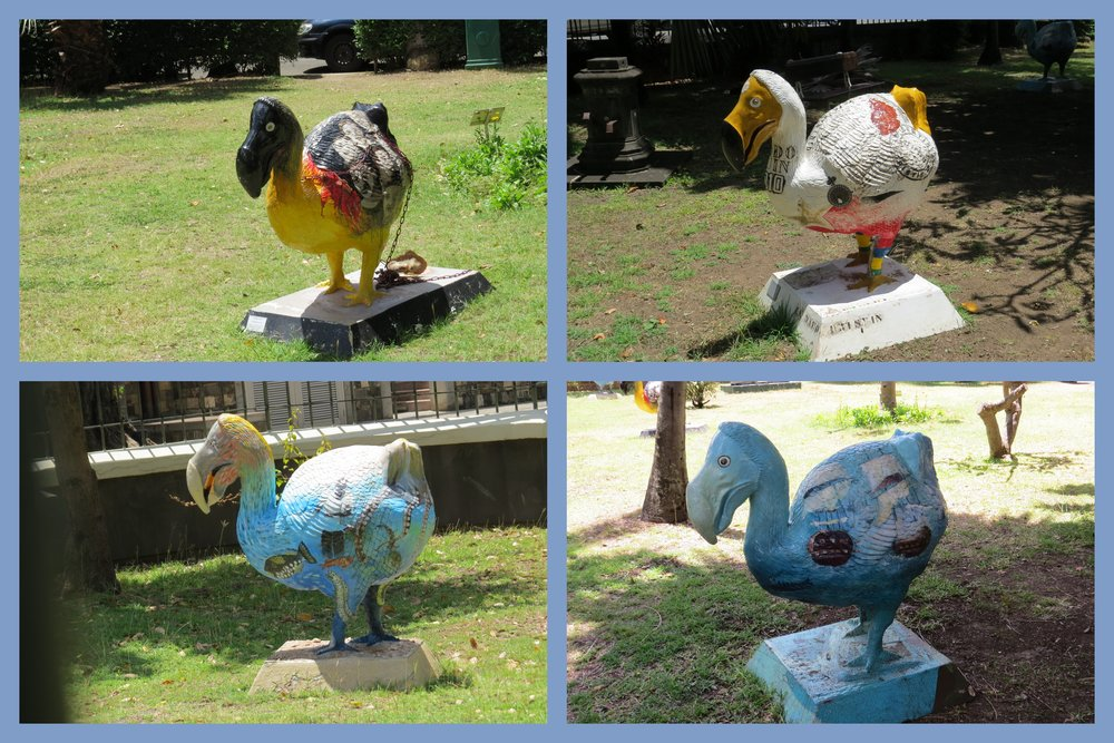 "On the fenced lawn in front of the national museum, they have a ""flock"" of dodos  reminiscent of the famous decorated Chicago cows , the mermaids of Norfolk, the boots of Cheyenne and the lobsters of Rockland, Maine."