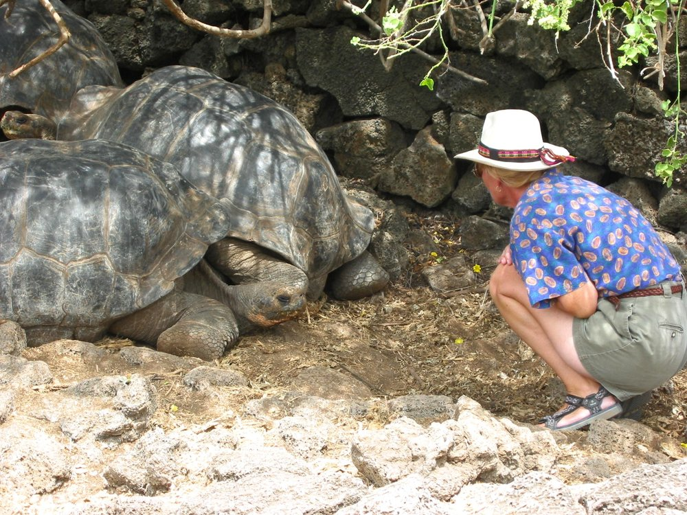 Meeting up with the famed giant tortoises of the Galapagos Islands