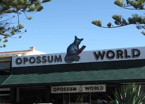 We got a hoot out of Opossum World and ALL things possum!