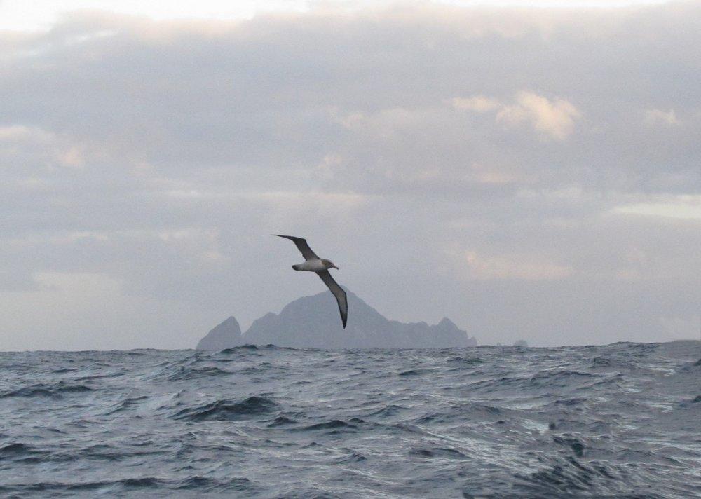Solander Island heading for Stewart Island