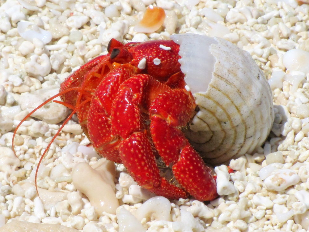 Hermit crabs scuttled along the shore.