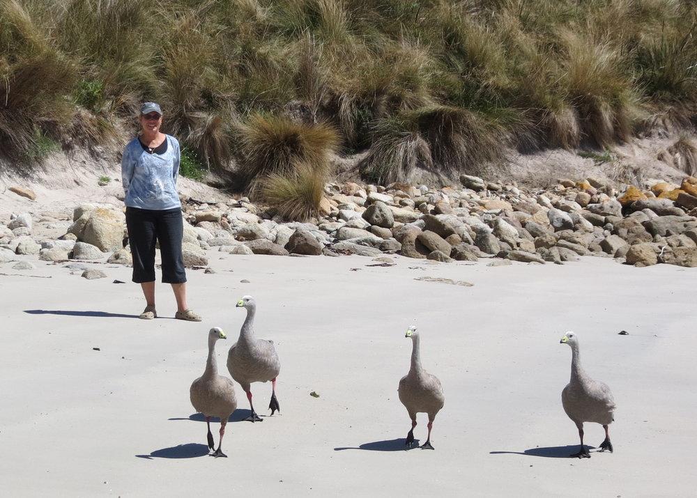 Endangered barren geese