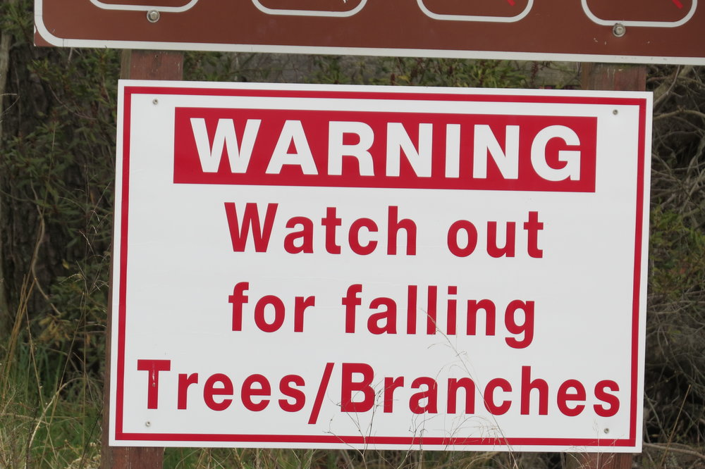 First it's golf balls, then it's trees and branches. It's just not safe out there.