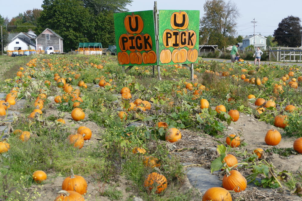 autumn_pick your own pumpkins.JPG
