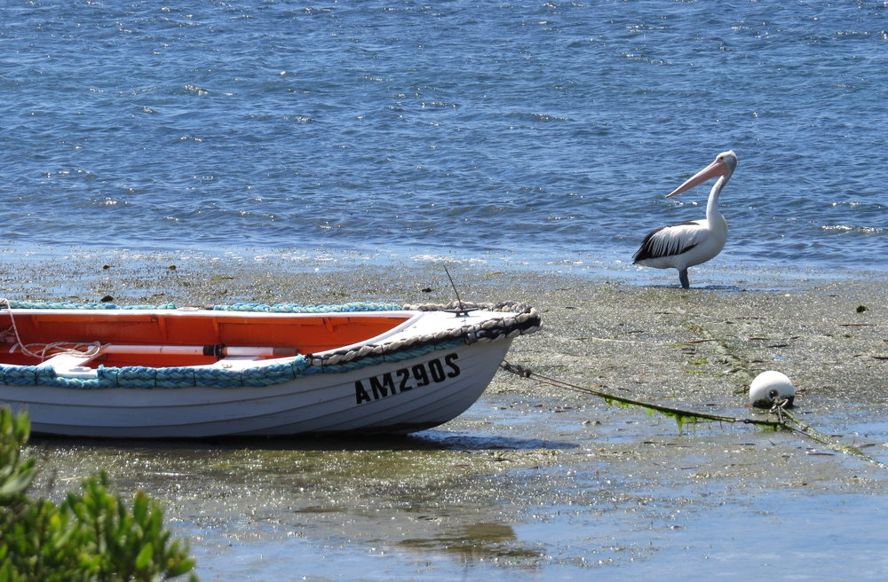 American River, Kangaroo Island - No roos, but lots of birdlife