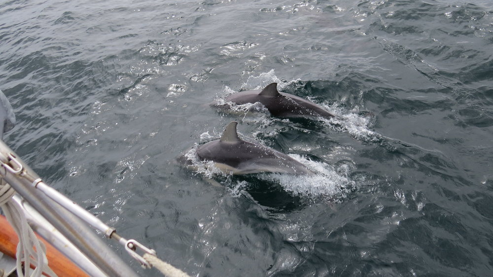 An escort into Streaky Bay
