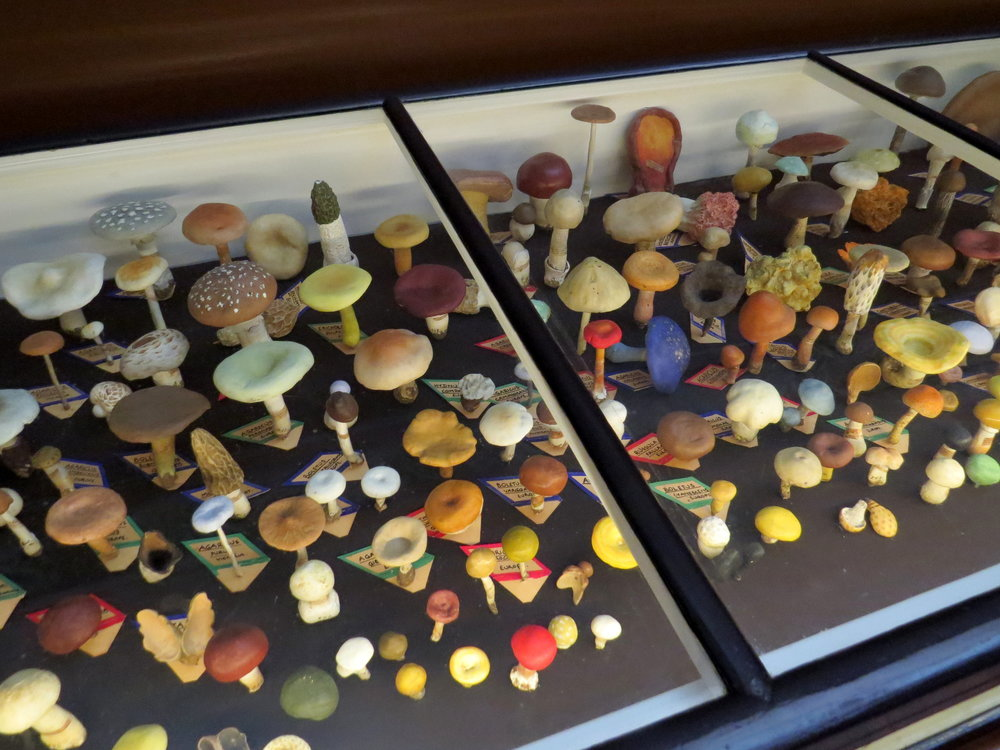 The Adelaide Botanic Garden mushroom display ... WOW