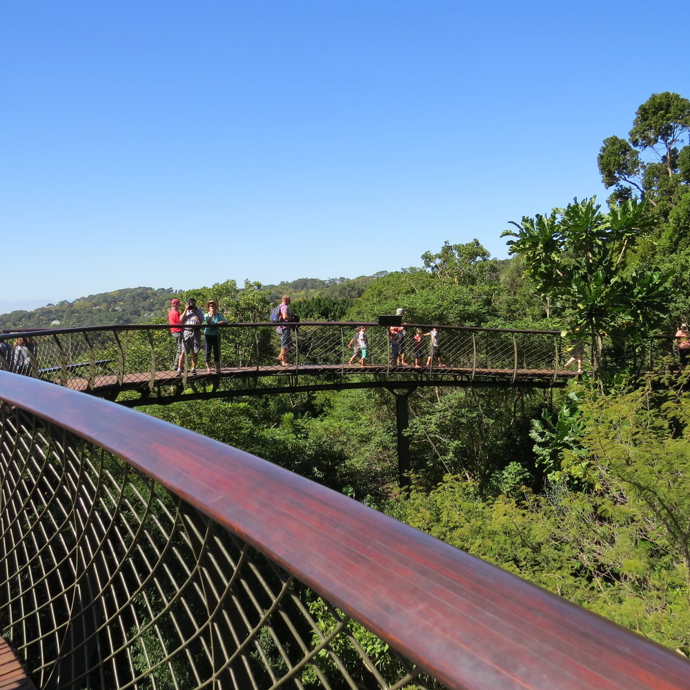 Canopy walk at Kirstenbosch