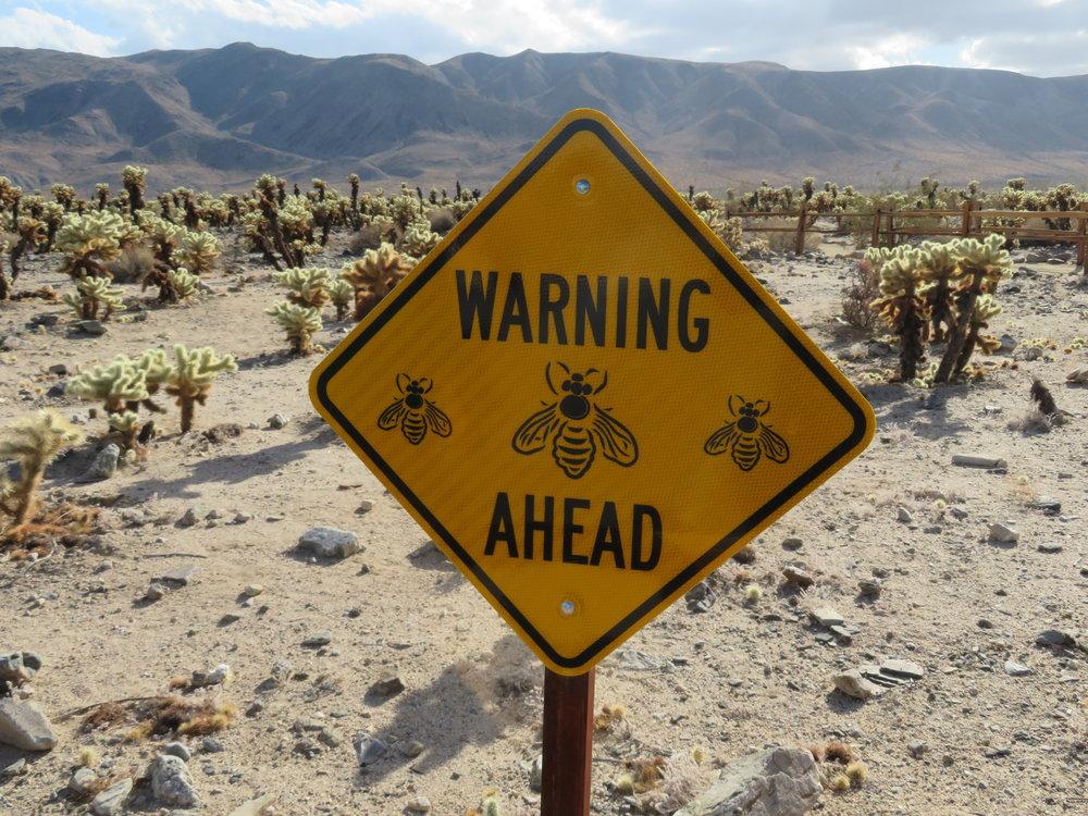Watch out for bees!