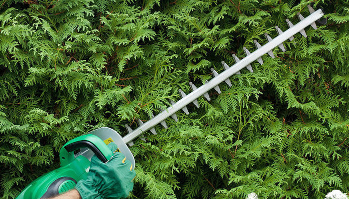 They let me loose in the front yard with an electric hedge trimmer ... Yahoo!