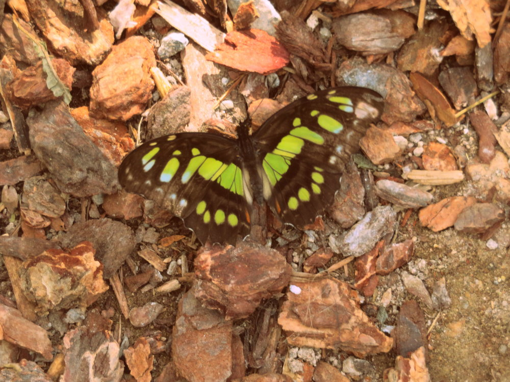 We almost stepped on this malachite who decided to rest on the ground just in front of us.