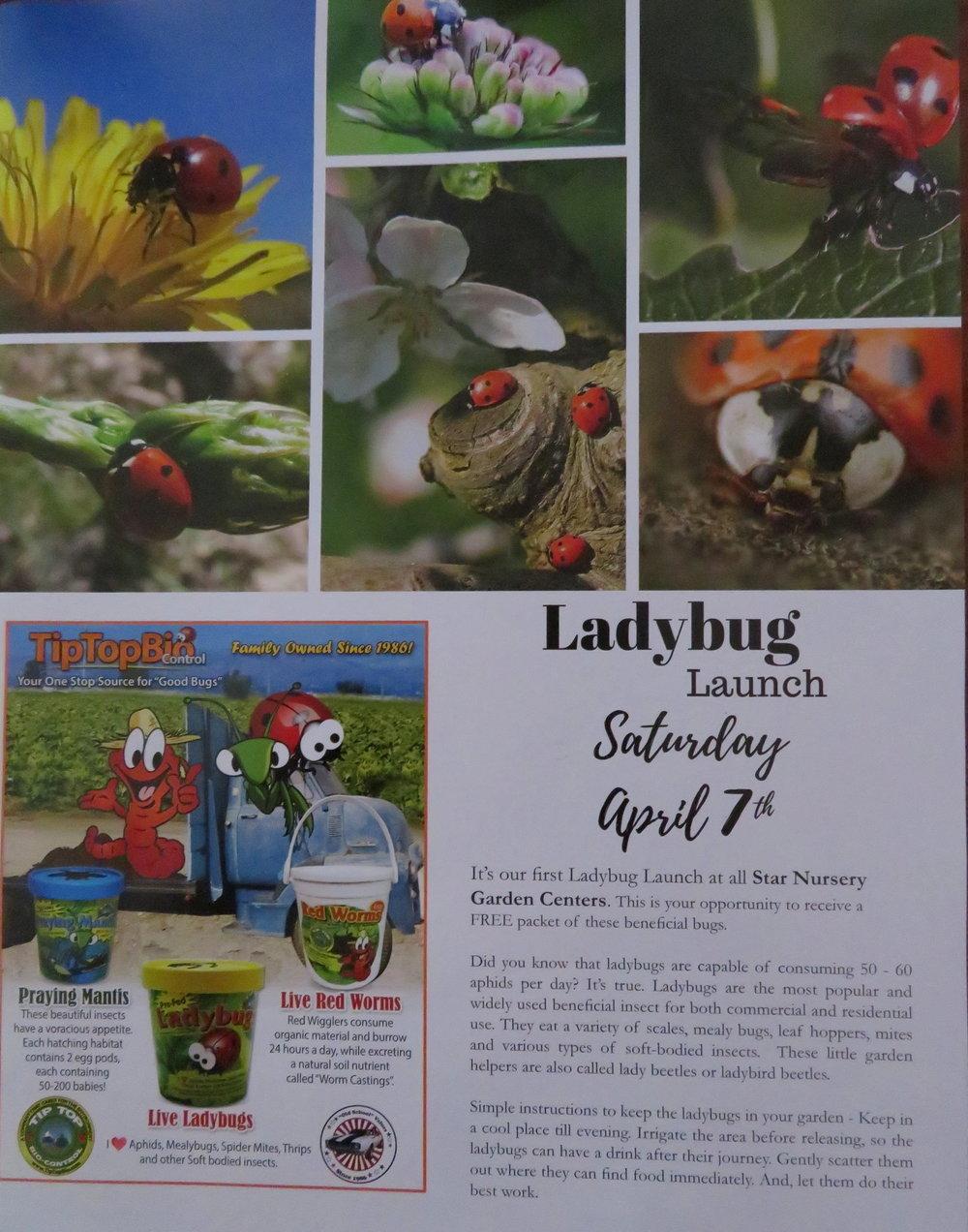 ladybug ad.JPG