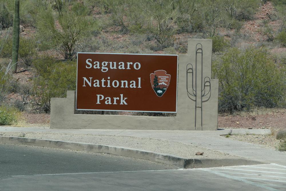 Entering Saguaro NP