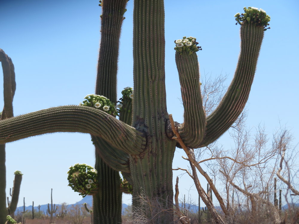 We see something different every time we walk the Desert View Trail.