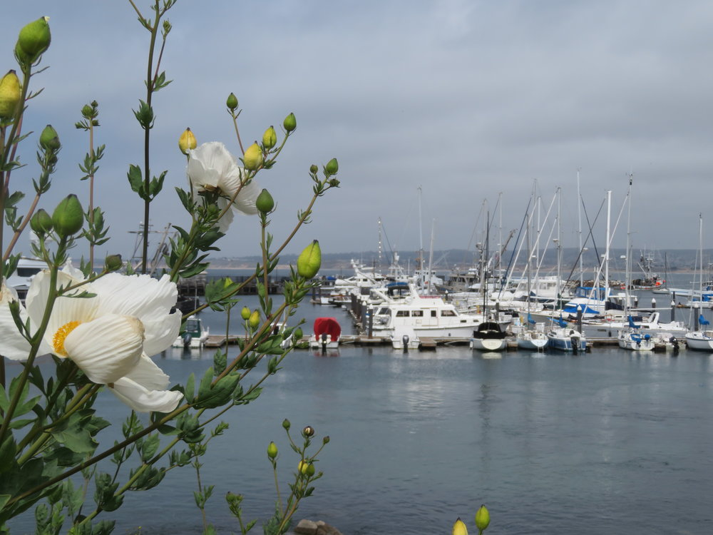 The Monterey Bay Coastal Trail took us past the marina ... we just had to look!