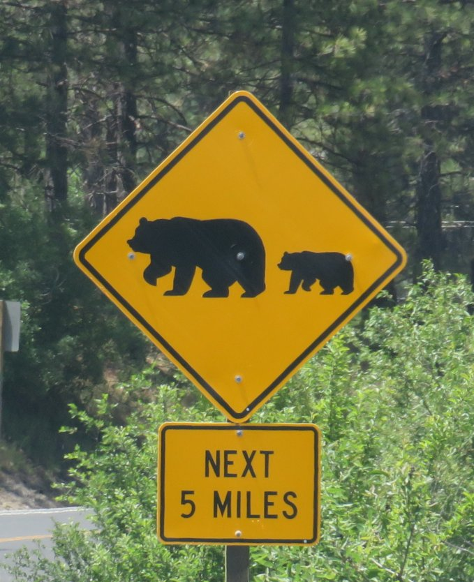 beware_bears ahead.jpg