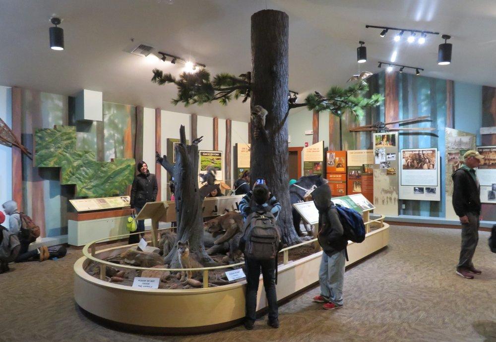 Calaveras Big Trees State Park Visitor's Center is pretty impressive.