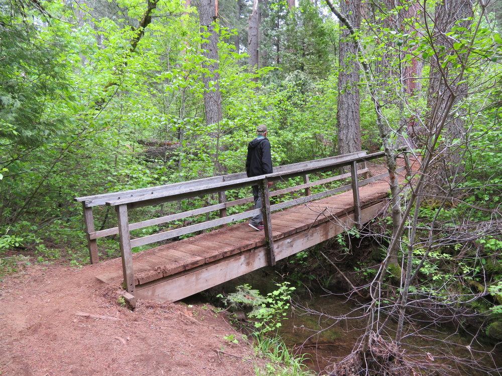 bigtrees2-southgrovetrail-footbridge big trees creek.JPG