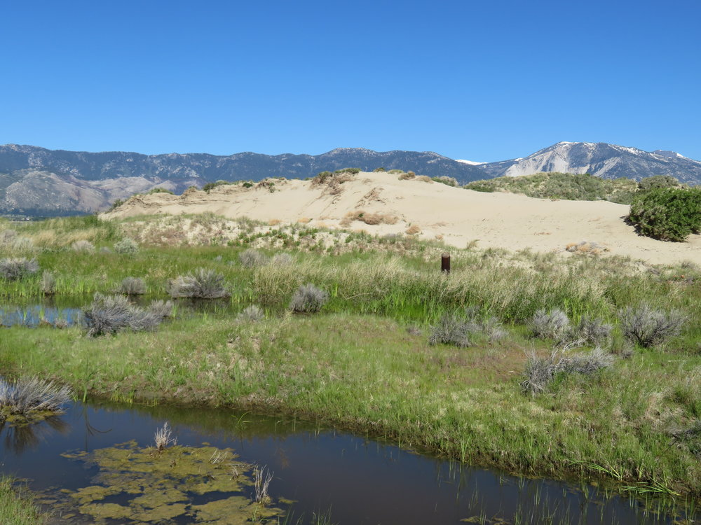 Dunes at Washoe Lake