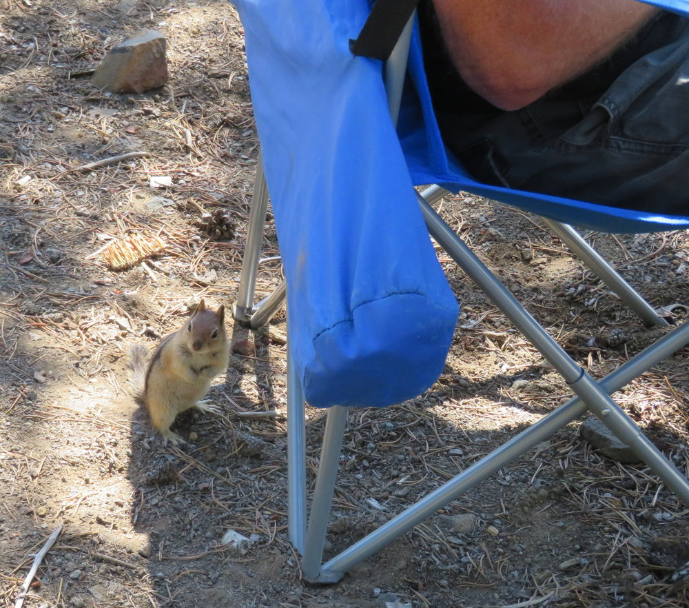 newberry_ground squirrel near chair.JPG