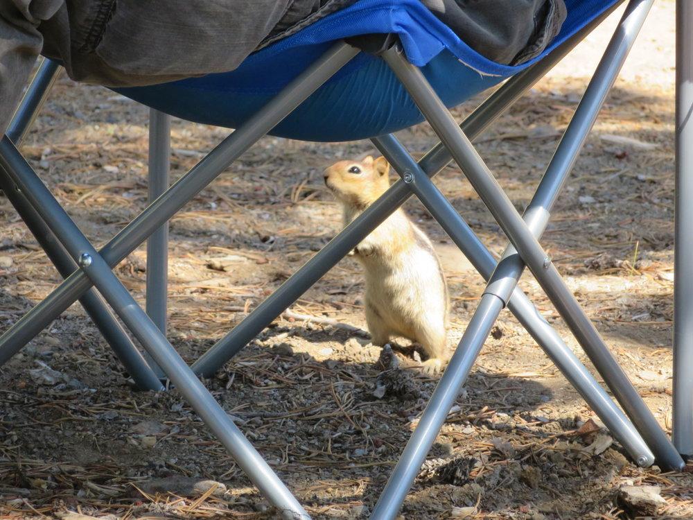 newberry_ground squirrel1.JPG