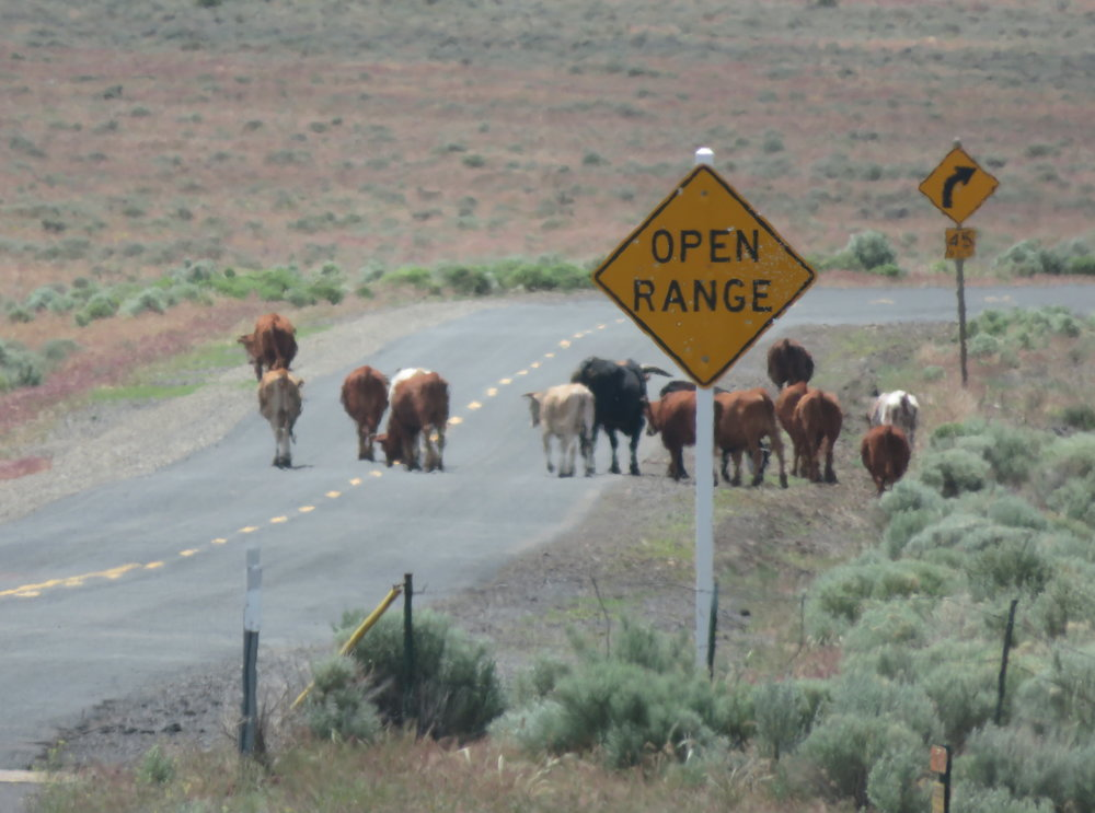 Cattle crosswalk