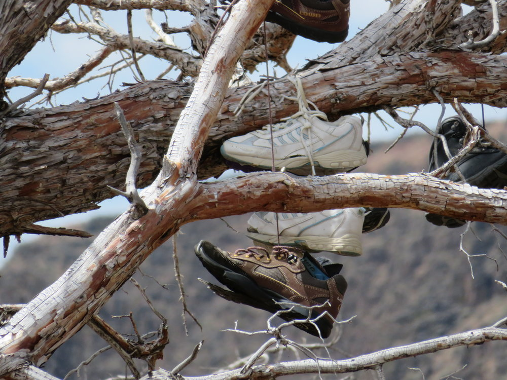 shoe tree closer look.JPG