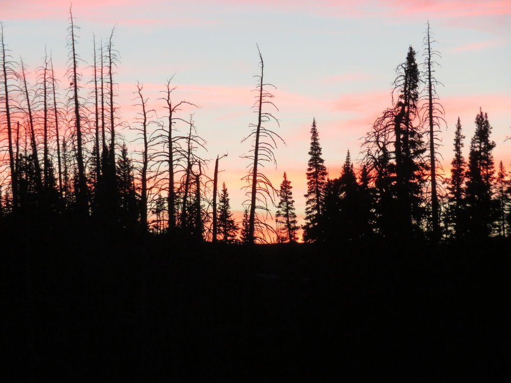 Beetle kill in this spruce forest silhouetted in a Cedar Breaks sunset