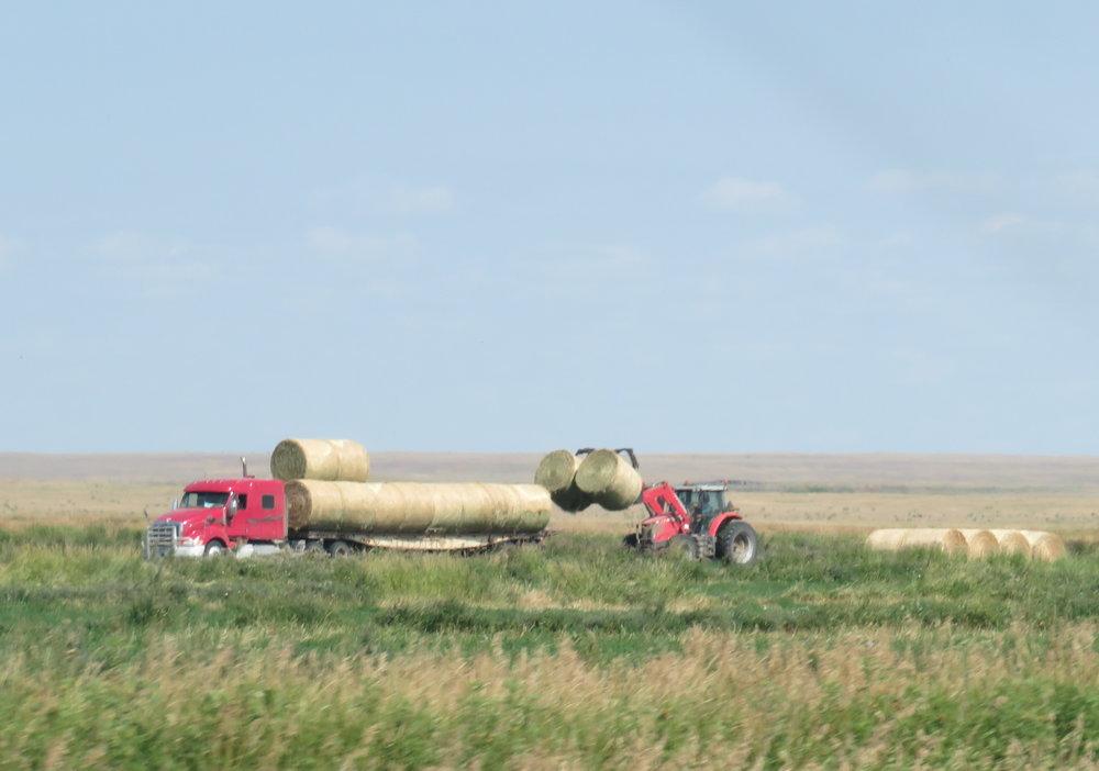 montana_loading hay rolls.JPG