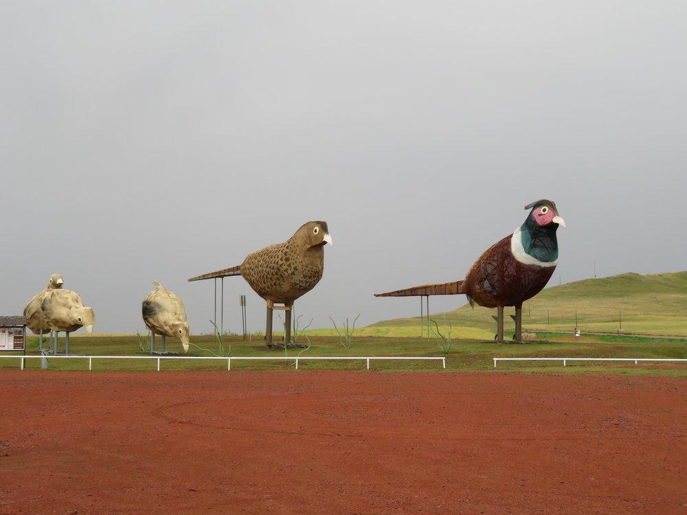 Pheasants on the prairie