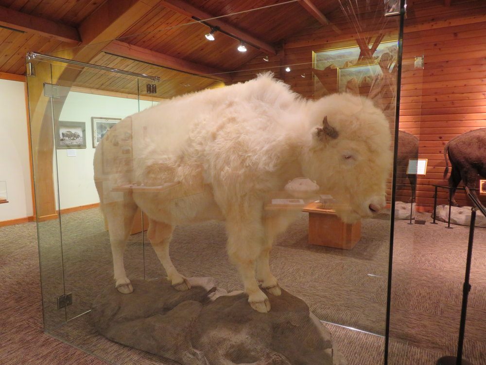 White Cloud at the National Buffalo Museum