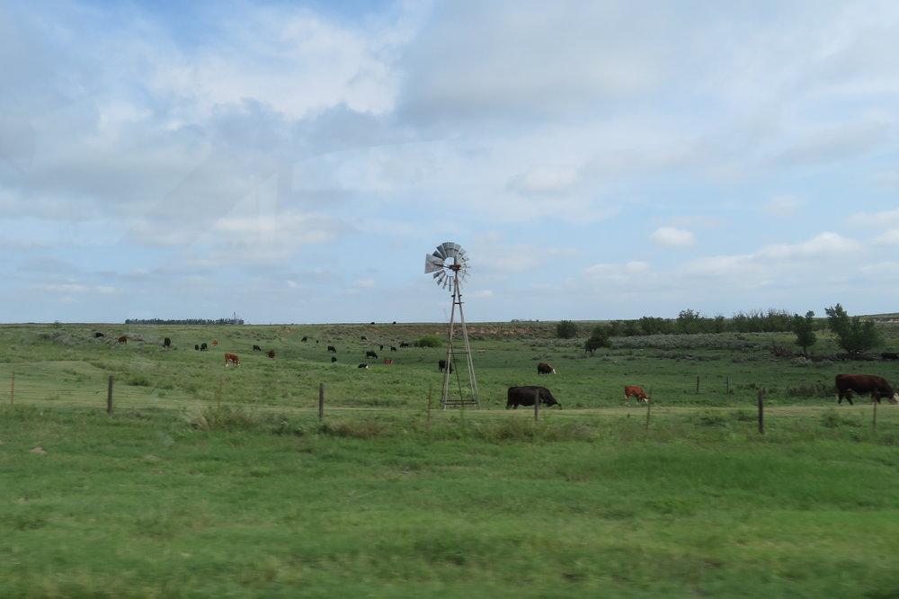 OK_windmill cattle.JPG