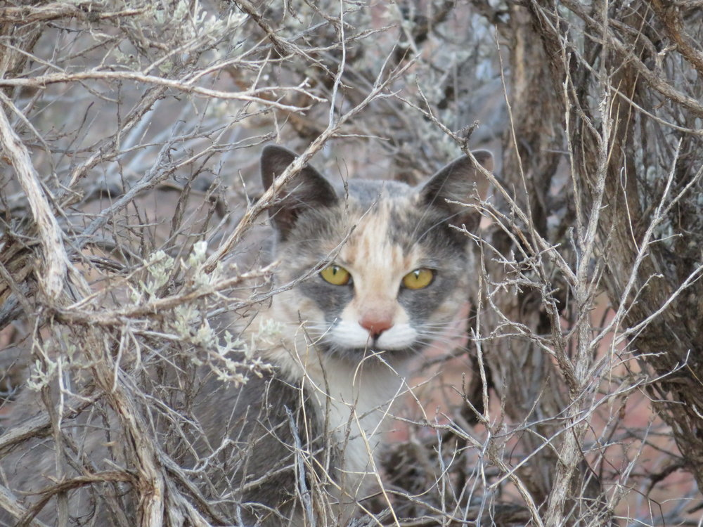 The campground warned of mountain lions in the area, but we didn't think they came in calico?