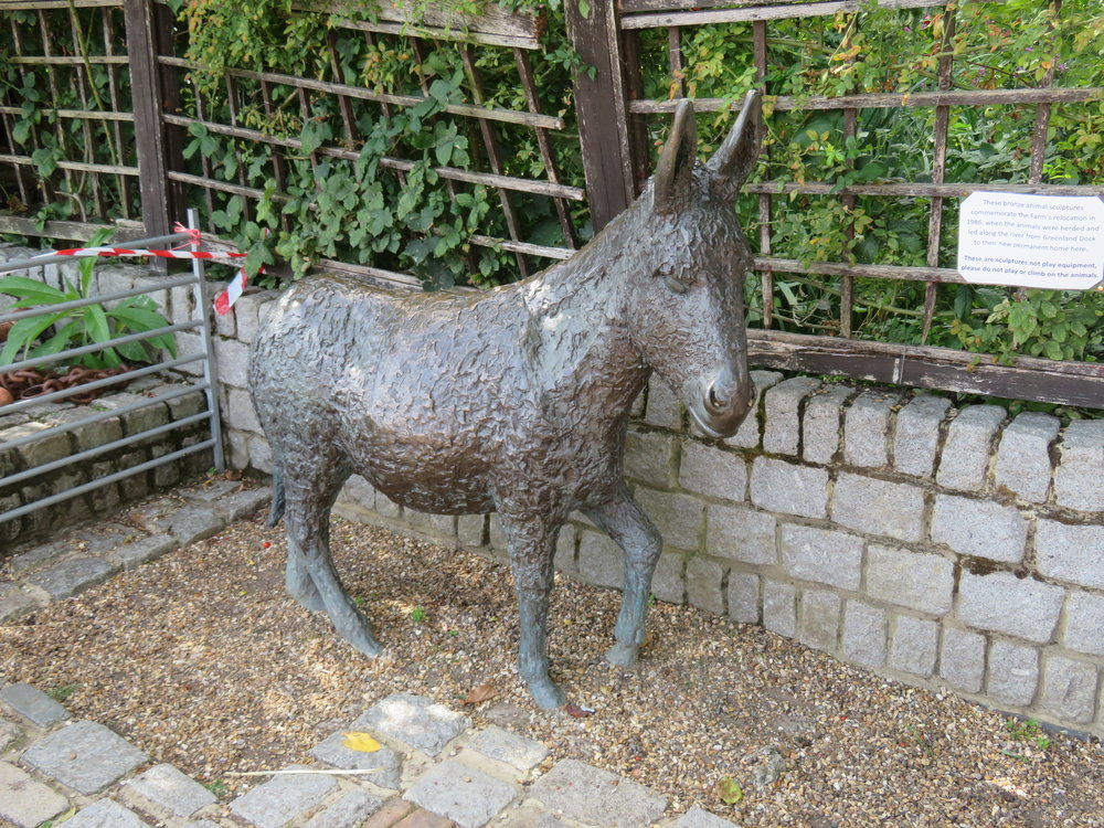 surrey docks farms-donkey.JPG