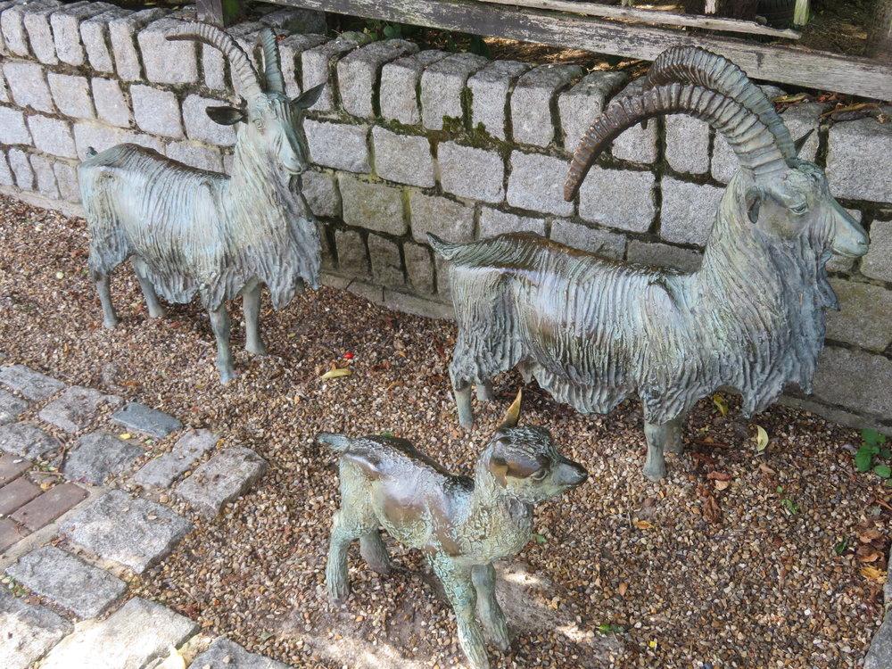 surrey docks farms-goats.JPG