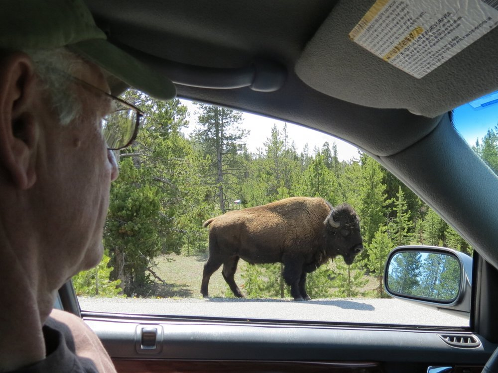 Yellowstone National Park  - give me a home where the buffalo roam            Wyoming - 2012