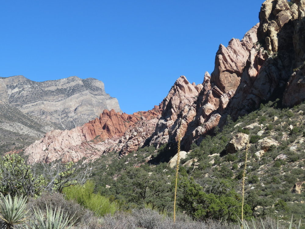 No animals were sighted at La Madre Spring, but the trail views were gob-smacking!