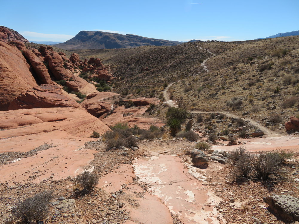 The Calico Hills trail was sheer pleasure to walk.